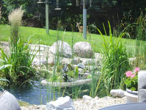 Pond at Larry and Erma Thompson's Cedar Rapids home (photo, Cindy Hadish)