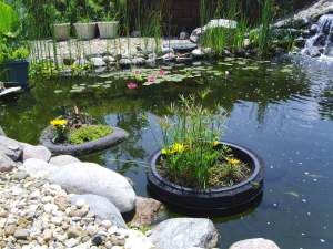 Plants help filter the water in the ponds at Larry and Erma Thompson's home (photo, Cindy Hadish)